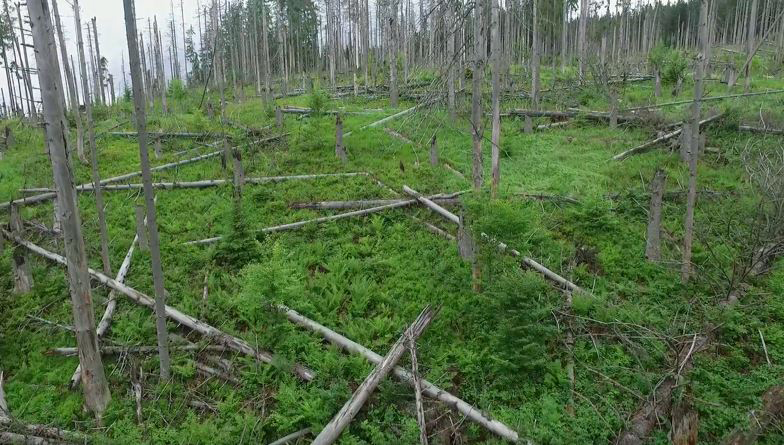 Storm and bark beetle damages, Sumava, Poland